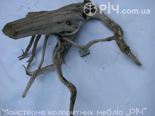 Заплутані коріння дерева.